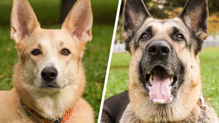 Хорошие девочки: история двух собак, которых не гладят перед работой