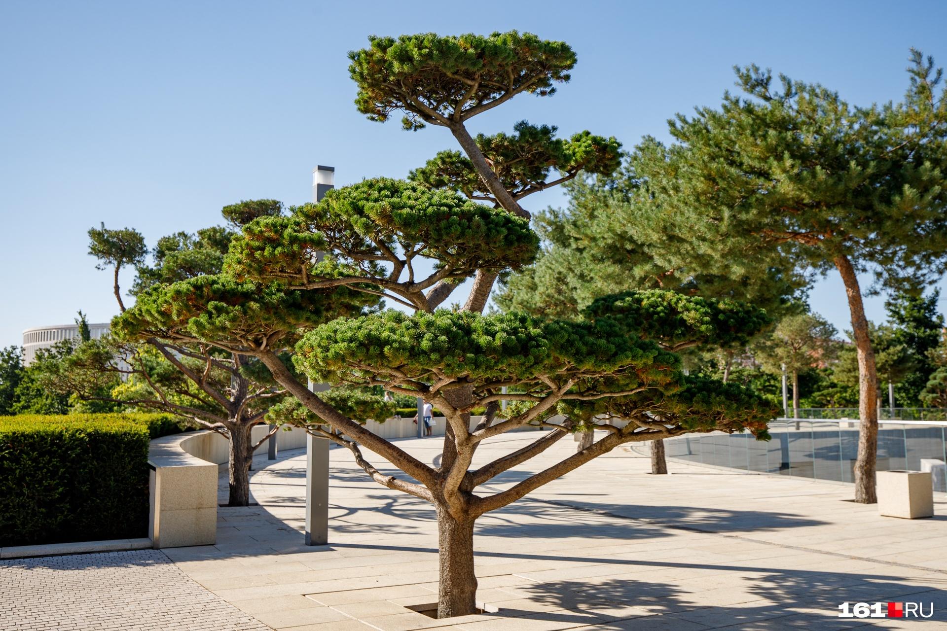 На сайте парка написано, что здесь высажено больше 2,5 тысячи деревьев<br>