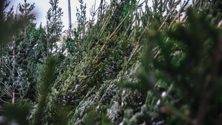 Губернатор Кузбасса официально объявил 31 декабря выходным днем
