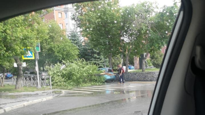 Разглядываем последствия бури: рухнувшие деревья и 40 тысяч новосибирцев без электричества