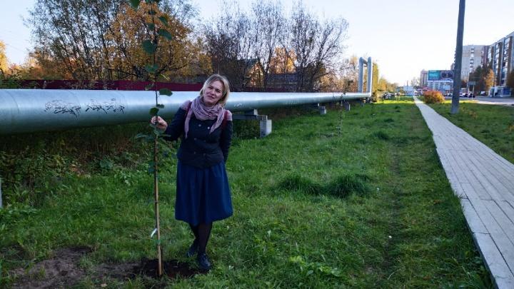 Сирень, липы и розы: какие территории в Архангельске озеленили волонтеры