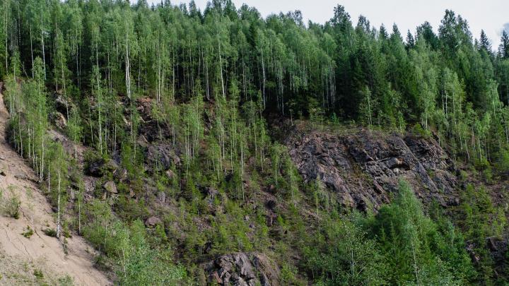 Нужны люди для поисков: в лесу под Добрянкой заблудились мужчина и его семилетний сын