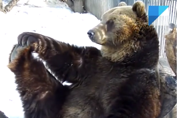 Уроки растяжки от медведя Фомы еще никто не пропускал!