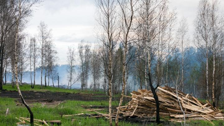 В Красноярском крае ликвидировали первый лесной пожар в этом году. Виной ему стал человек