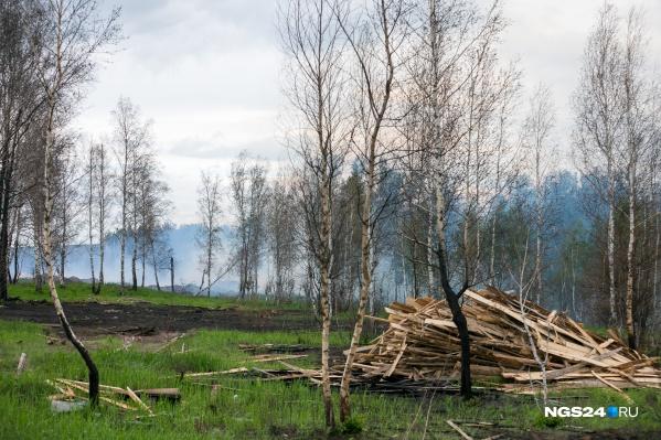 Первый пожар устроили люди в лесу Минусинска
