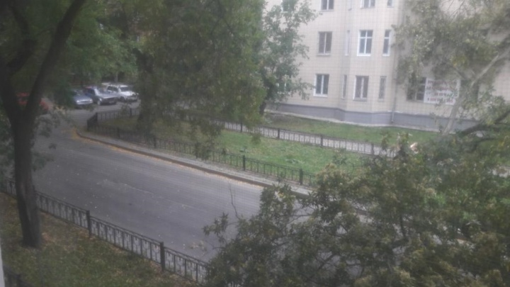 В Екатеринбурге поднялся сильный ветер. Он валит деревья и поднимает столбы пыли