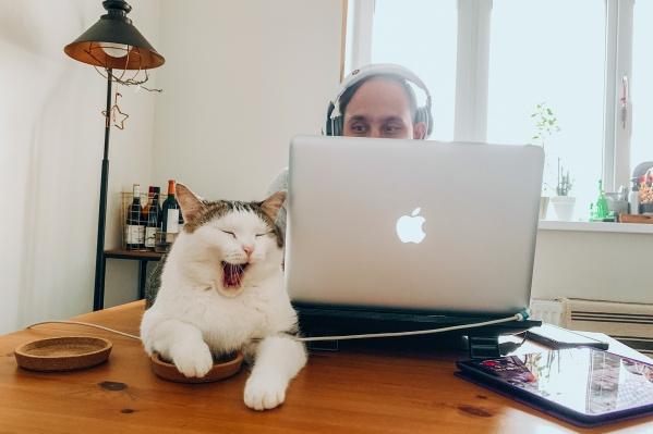 Удалите безвозвратно нужный файл — даже котик заплачет!