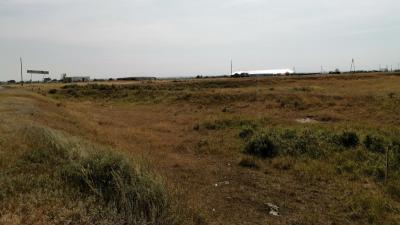 «Эта свалка нас добьёт»: зауральцы боятся размещения пункта сбора мусора возле села