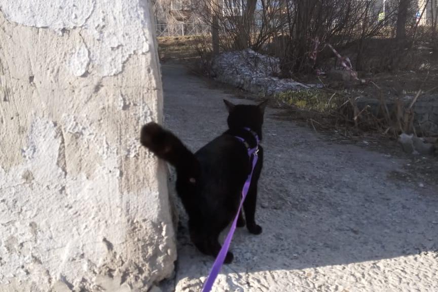 Чёрная кошка — Маня