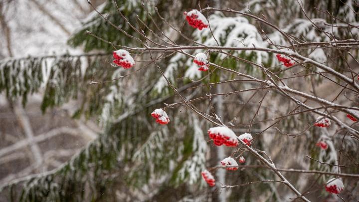 Новосибирск накрыло снегом — 25 фото с зимних улиц города (смотрим, пока не растаяло)