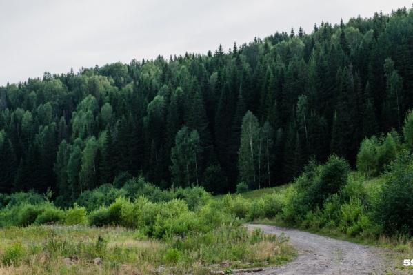 Мальчика ищут в лесу