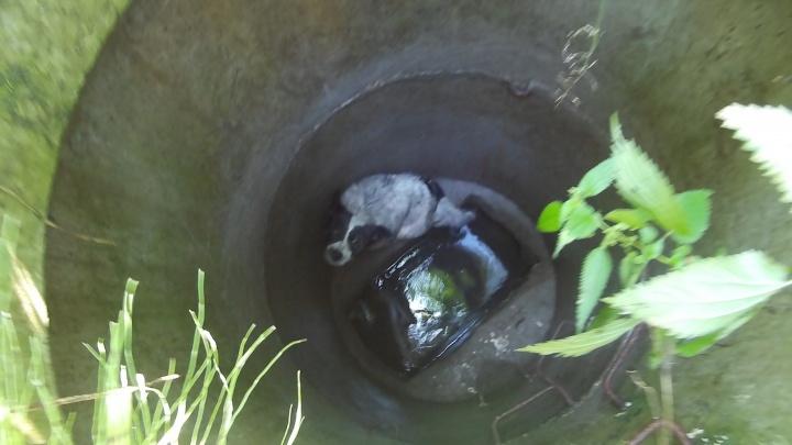 Чудо, что ее заметили: екатеринбуржец спас собаку, провалившуюся в колодец в глухом лесу