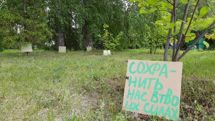 «Не рубите, мужики»: общественники устроили пикет деревьев в дендросаду