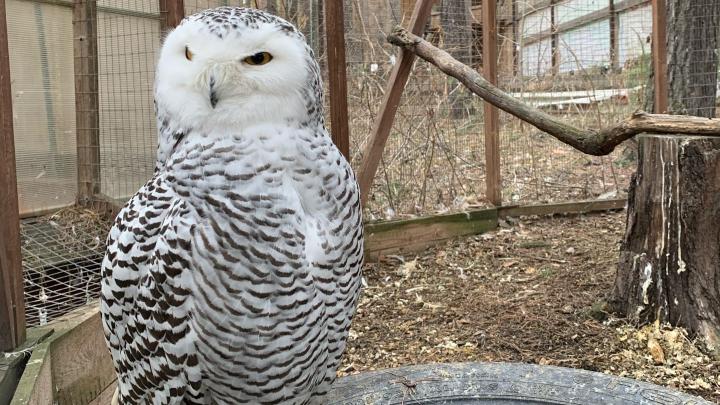 Хищных птиц из «Холзана» будут кормить бесплатно по поручению губернатора
