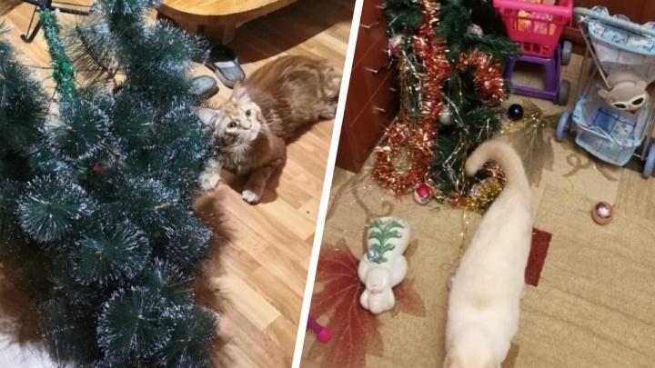 «Мы уже всё уронили!»: 25 котов, которые расправились с новогодней елкой