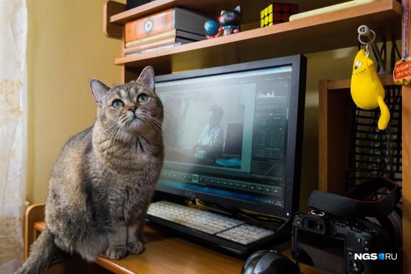 Кот Сеня ждёт, когда фотограф НГС отвлечётся от работы и уделит ему немного внимания