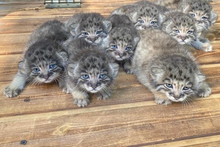 Для сравнения: на этом фото, которое на прошлой неделе публиковал зоопарк, глаза котят были голубыми