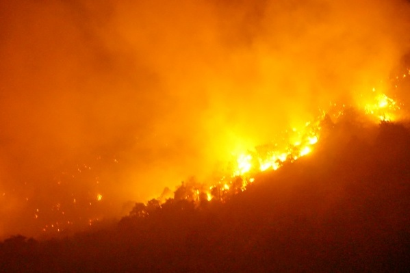 В эпицентре пожара — редкие деревья