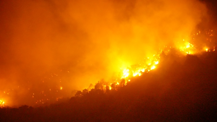 В Анапе три дня горел заповедник «Утриш»: огонь уничтожил уникальный лес