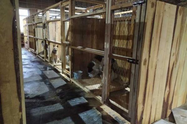 Сегодня вопросом бездомных собак по контрактам занимаются три организации — ИП Бурков и ИП Высоцкая отвечают за отлов, а организация «Бездомный пес» — за стерилизацию и содержание