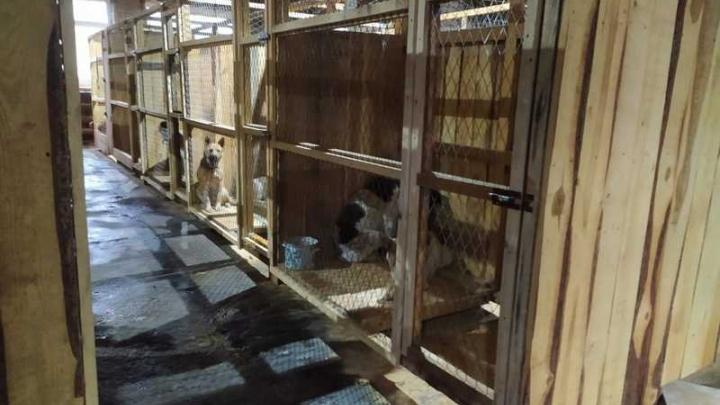 Депутаты поставили под сомнение вопрос строительства городского приюта для бездомных собак