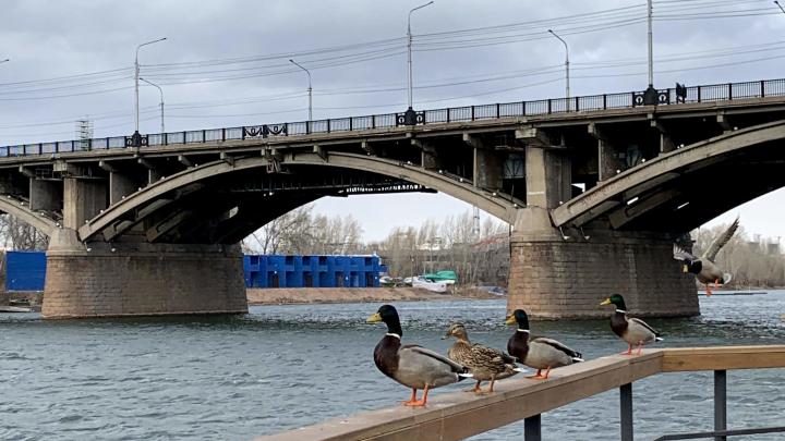 Красноярцев ждут заморозки в последнюю неделю марта