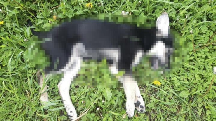 «Их выбросили непонятно с какого этажа»: ярославцы обнаружили под окнами тела двух щенков