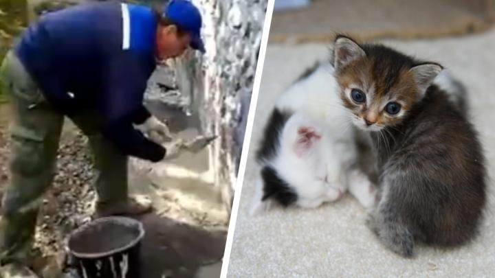 Управляющая компания подаст заявление на волонтёров, которые спасли замурованных в подвале котят