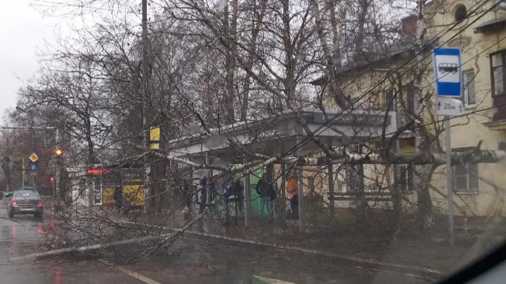 В Ярославле рядом с остановкой упало дерево