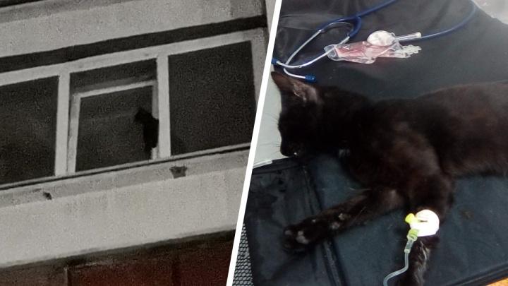 «Дыхание было редким и прерывистым»: на Уралмаше вытащили котика, застрявшего в окне седьмого этажа