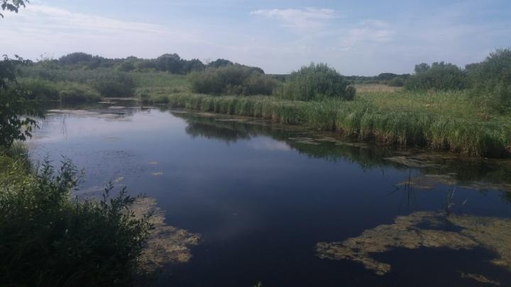 Труп москвички нашли в озере под Волгоградом