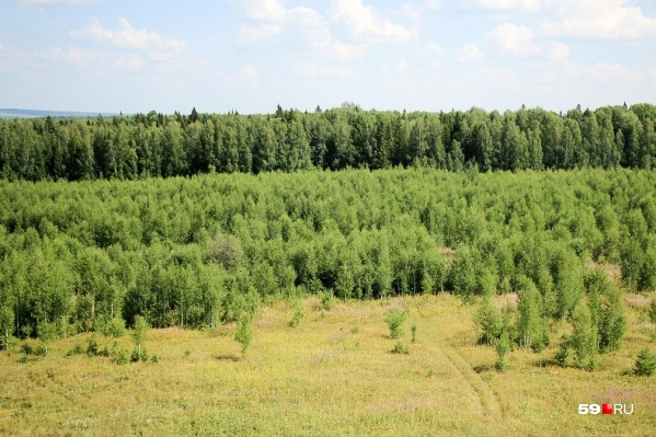 Идти на нужное место придется через лес