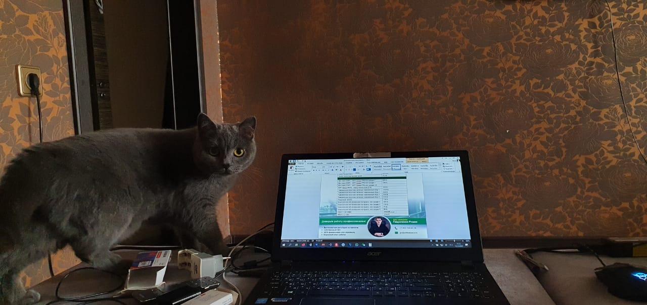 Ещё одна кошка, которая любит быть ближе к ноутбуку. Её хозяйка рассказывает: «Кошке Лизе очень нравится рабочий ноутбук, поэтому всегда во время работы она начинает тереться мордочкой об экран»