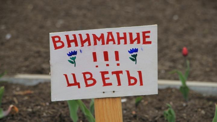 Власти Архангельска потратят 2,3 миллиона рублей на цветы в центре города