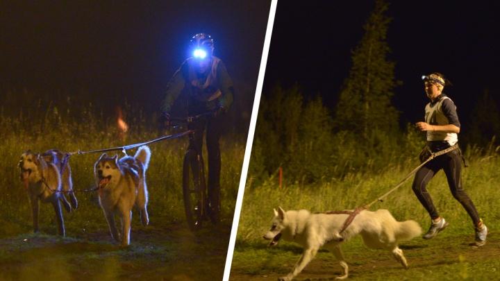 Гонки хвостатых и четвероногих: ночью на Уктусе соревновались велосипедисты и бегуны с собаками