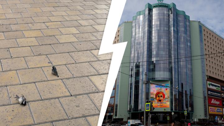 Тюменцев напугали мертвые птицы в центре города. Птичий грипп или нет?