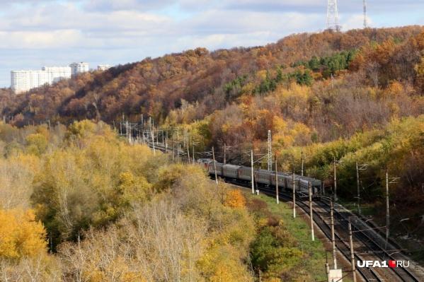 Объект предлагают построить на месте лесопосадки
