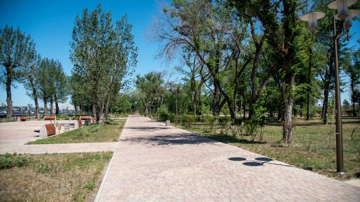 «Газпрому» разрешили вырубить сотни деревьев на левом берегу Дона