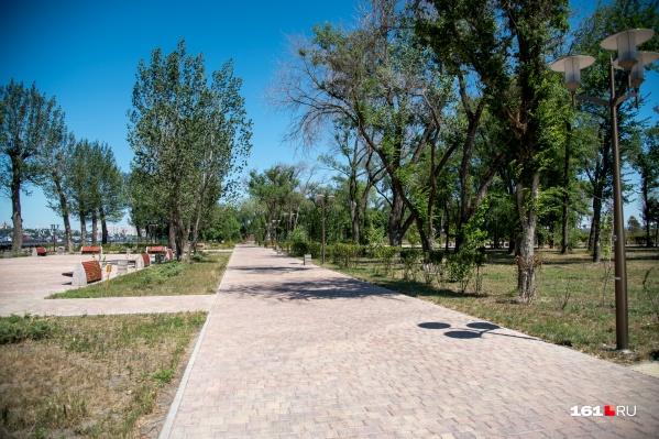 Вместо вырубленных деревьев компания обещает посадить новые