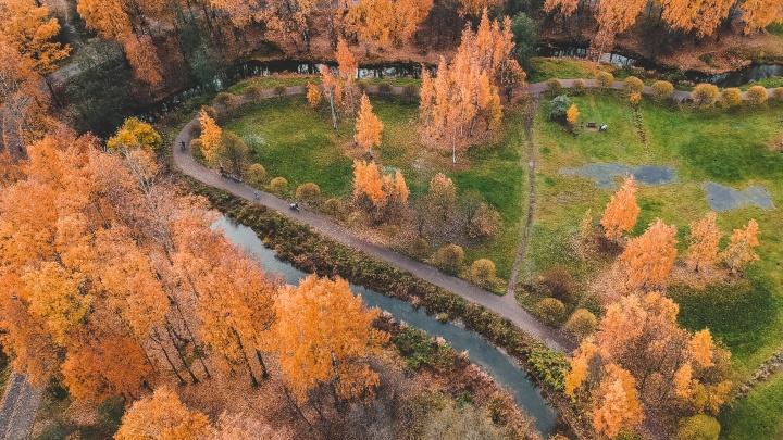 Участники AgroCode научатся управлять роем дронов и определять больные деревья по фото