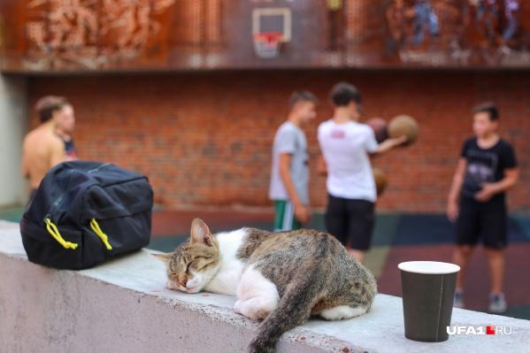«Арт-квадрат» любят даже кошки