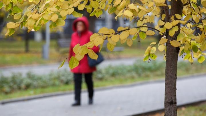Сильный ветер и похолодание до -2: рассказываем о погоде в Волгограде и области на выходные