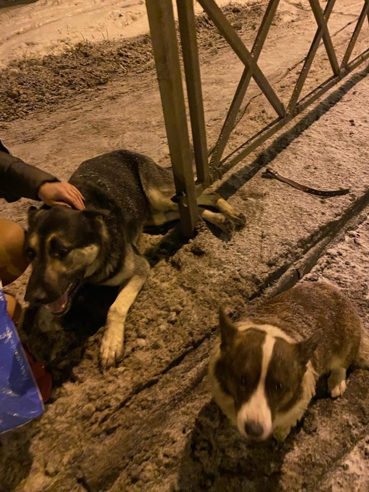Собака получила травмы, несовместимые с жизнью