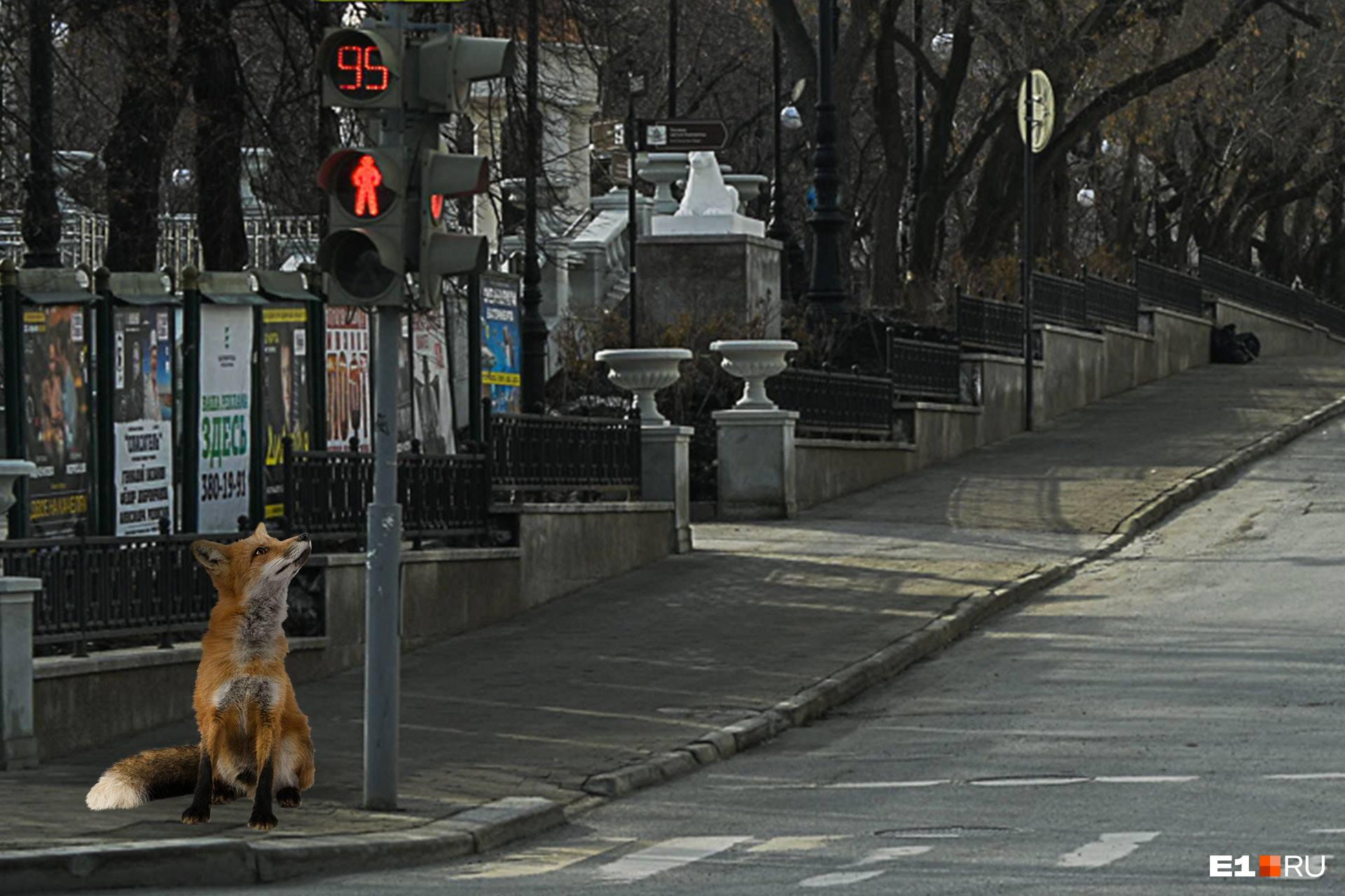 Лисы, кстати, довольно часто приходят в город