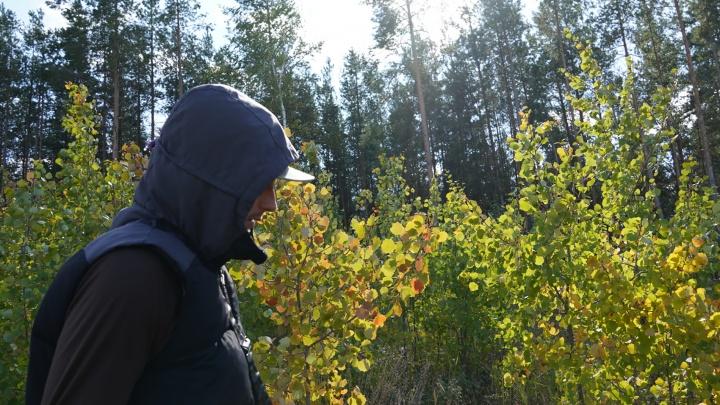 В Самарской области запрет на посещение лесов продлили до середины октября