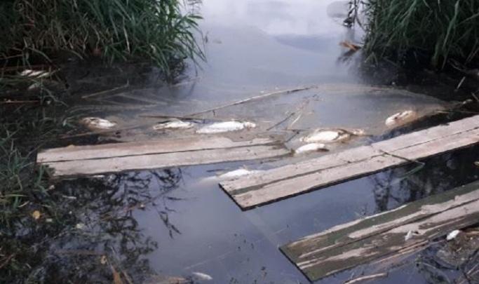 В Волгограде на Соленом пруду утонула школьница