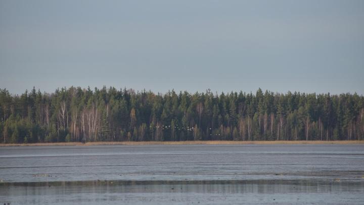 Власти отказались спасать от гибели самое крупное озеро Нижегородской области