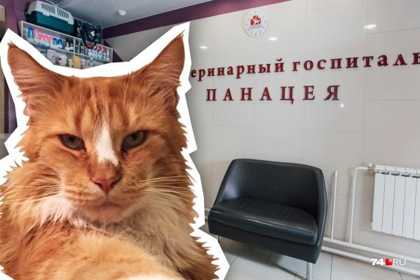 Коту Борису было восемь лет