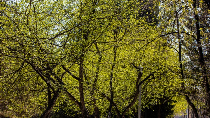 В город пришла весна — 10 фото зелёного Новосибирска для тех, кто воздерживается от прогулок