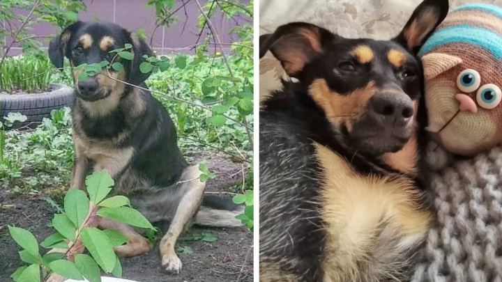 «Будут бить или целовать?»: пять брошенных собак, преобразившихся в новой семье
